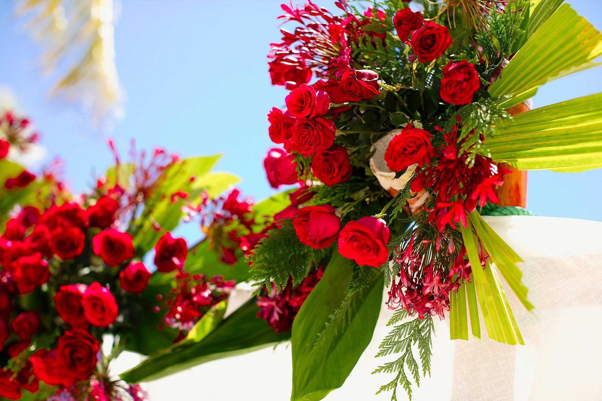 Где купить цветы в доминикане купить цветы нарциссы в спб в прод